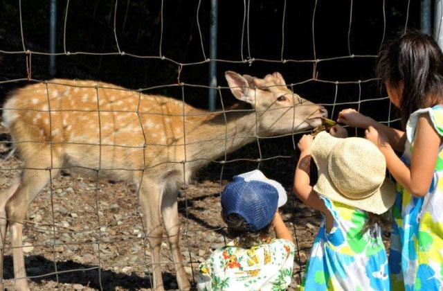 Abira Deer Park