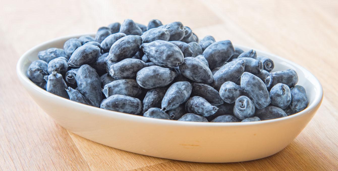 Atsuma Haskap Berries