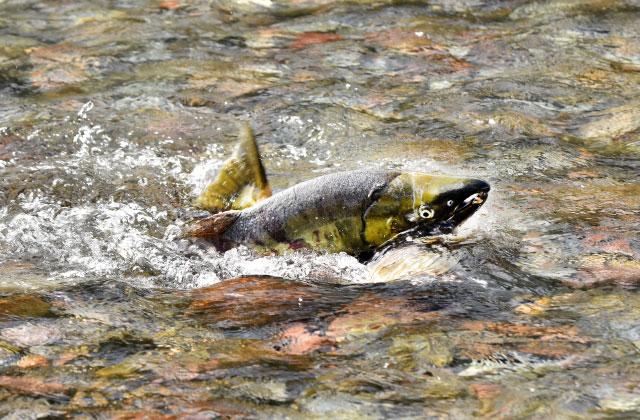 Shiraoi Uyoro and Ayoro River